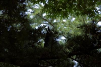 soku_28079.jpg :: 動物 鳥 野鳥 自然の鳥 未記入鳥