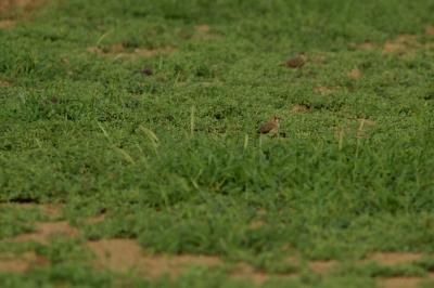 soku_28123.jpg :: 動物 鳥 野鳥 自然の鳥 未記入鳥