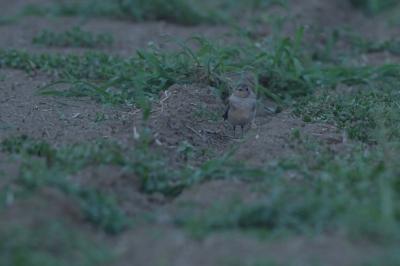 soku_28148.jpg :: 動物 鳥 野鳥 自然の鳥 未記入鳥