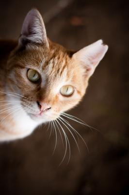 soku_28152.jpg :: 動物 哺乳類 猫 ネコ
