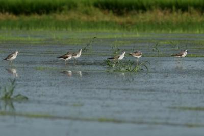 soku_28164.jpg :: 動物 鳥 野鳥 自然の鳥 未記入鳥