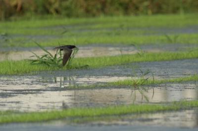 soku_28165.jpg :: 動物 鳥 野鳥 自然の鳥 未記入鳥