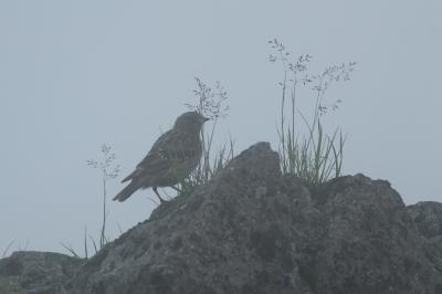 soku_28190.jpg :: 動物 鳥 野鳥 自然の鳥 未記入鳥
