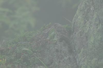 soku_28202.jpg :: 動物 鳥 野鳥 自然の鳥 未記入鳥