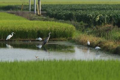 soku_28230.jpg :: 動物 鳥 野鳥 自然の鳥 未記入鳥
