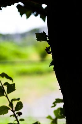 soku_28281.jpg :: 動物 虫 昆虫