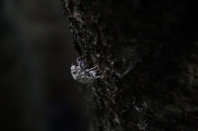 soku_28285.jpg :: 動物 虫 昆虫