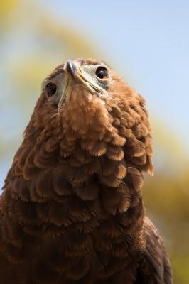 soku_28286.jpg :: 動物 鳥 猛禽類