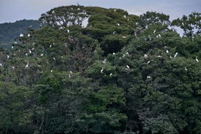 soku_28330.jpg :: 動物 鳥 野鳥 自然の鳥