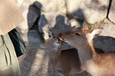 soku_28340.jpg :: 動物 哺乳類 鹿 シカ