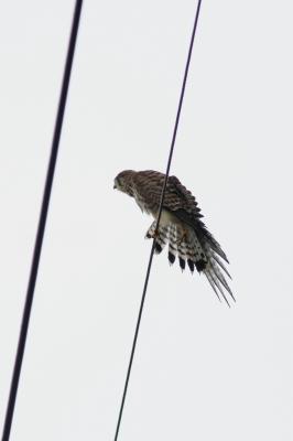 soku_28365.jpg :: 動物 鳥 野鳥 自然の鳥 未記入鳥