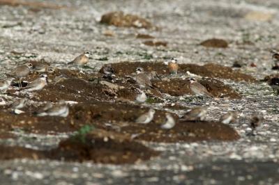 soku_28395.jpg :: 動物 鳥 野鳥 自然の鳥 未記入鳥