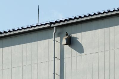 soku_28396.jpg :: 動物 鳥 猛禽類