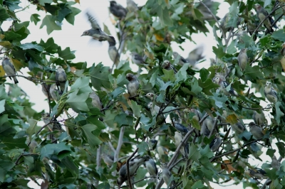 soku_28420.jpg :: 動物 鳥 野鳥 自然の鳥 未記入鳥