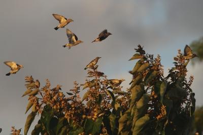 soku_28424.jpg :: 動物 鳥 野鳥 自然の鳥 未記入鳥