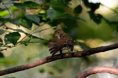 soku_28425.jpg :: 動物 鳥 野鳥 自然の鳥 未記入鳥