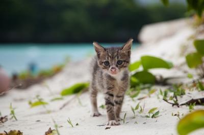 soku_28433.jpg :: 動物 哺乳類 猫 ネコ 子猫