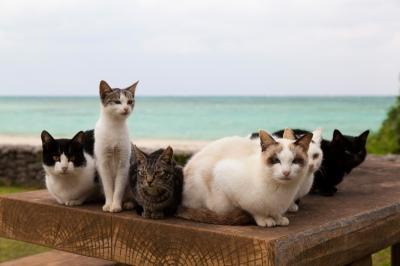 soku_28439.jpg :: 動物 哺乳類 猫 ネコたち