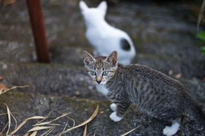 soku_28441.jpg :: 動物 哺乳類 猫 ネコ
