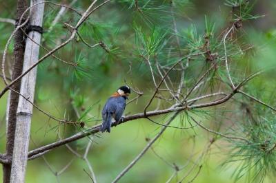 soku_28451.jpg :: 動物 鳥 野鳥 自然の鳥 未記入鳥
