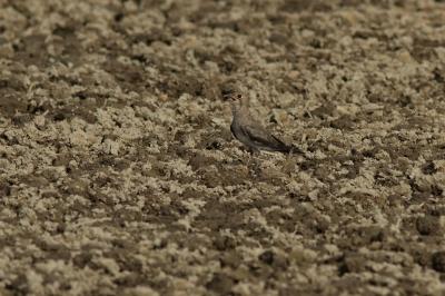 soku_28453.jpg :: 動物 鳥 野鳥 自然の鳥 未記入鳥