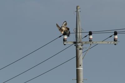 soku_28465.jpg :: 動物 鳥 猛禽類