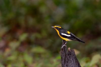 soku_28502.jpg :: 動物 鳥 野鳥 自然の鳥 未記入鳥
