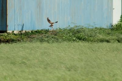 soku_28539.jpg :: 動物 鳥 猛禽類