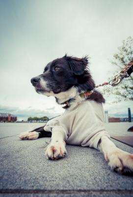 soku_28643.jpg :: 動物 ペット 犬
