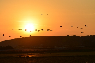 soku_28655.jpg :: 動物 鳥 野鳥 自然の鳥 未記入鳥 風景 自然 空 夕日 夕焼け 日没