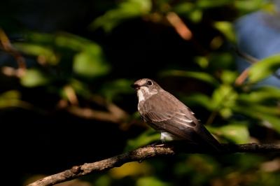 soku_28665.jpg :: 動物 鳥 野鳥 自然の鳥 未記入鳥