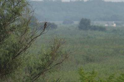 soku_28668.jpg :: 動物 鳥 野鳥 自然の鳥 未記入鳥