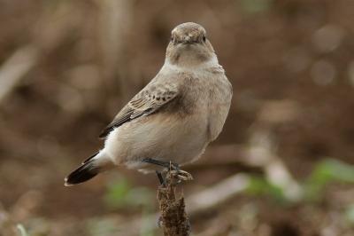 soku_28673.jpg :: 動物 鳥 野鳥 自然の鳥 未記入鳥