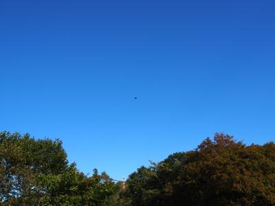soku_28692.jpg :: 風景 自然 空 青空