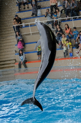 soku_28728.jpg :: 動物 海の生物 イルカ