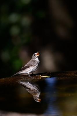soku_28763.jpg :: 動物 鳥 野鳥 自然の鳥 未記入鳥