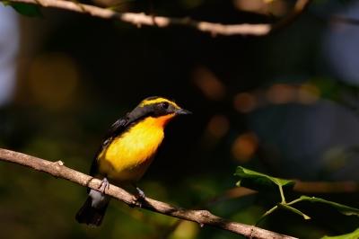 soku_28770.jpg :: 動物 鳥 野鳥 自然の鳥 未記入鳥