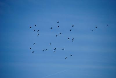 soku_28774.jpg :: 動物 鳥 野鳥 自然の鳥 未記入鳥