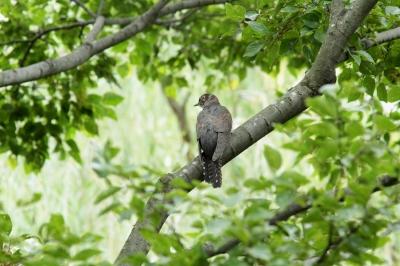 soku_28786.jpg :: 動物 鳥 野鳥 自然の鳥 未記入鳥