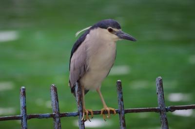 soku_28800.jpg :: 動物 鳥 野鳥 自然の鳥 未記入鳥