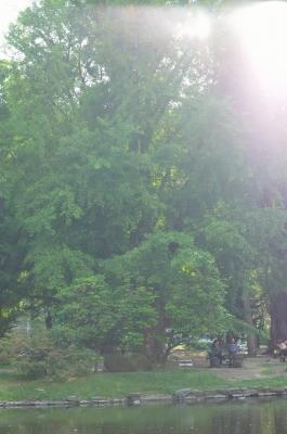 soku_28802.jpg :: 風景 街並み 公園 逆光
