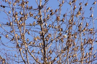soku_28818.jpg :: 動物 鳥 野鳥 自然の鳥 未記入鳥