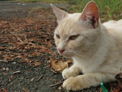soku_28819.jpg :: 動物 哺乳類 猫 ネコ PowerShotG15 コンデジ埼玉 lock