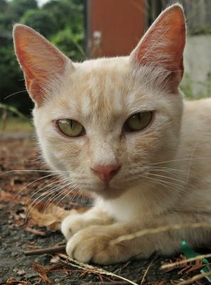 soku_28820.jpg :: 動物 哺乳類 猫 ネコ PowerShotG15 コンデジ埼玉 lock