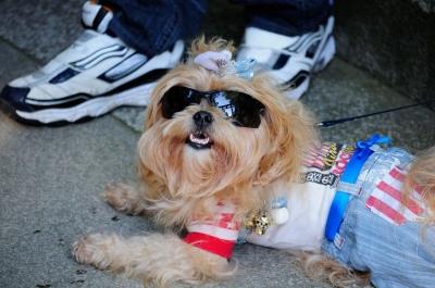 soku_28830.jpg :: 動物 ペット 犬 イヌのサングラス