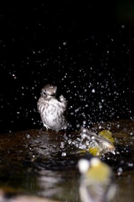 soku_28909.jpg :: 動物 鳥 野鳥 自然の鳥 未記入鳥