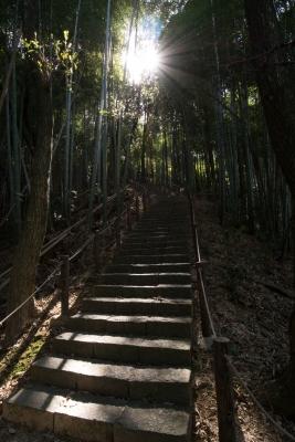 soku_28926.jpg :: 風景 自然 竹林