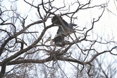 soku_28936.jpg :: 動物 鳥 野鳥 自然の鳥 未記入鳥