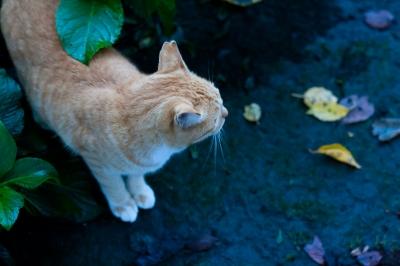 soku_28943.jpg :: 動物 哺乳類 猫 ネコ