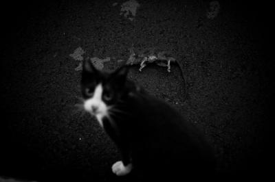 soku_28945.jpg :: 動物 哺乳類 猫 ネコ